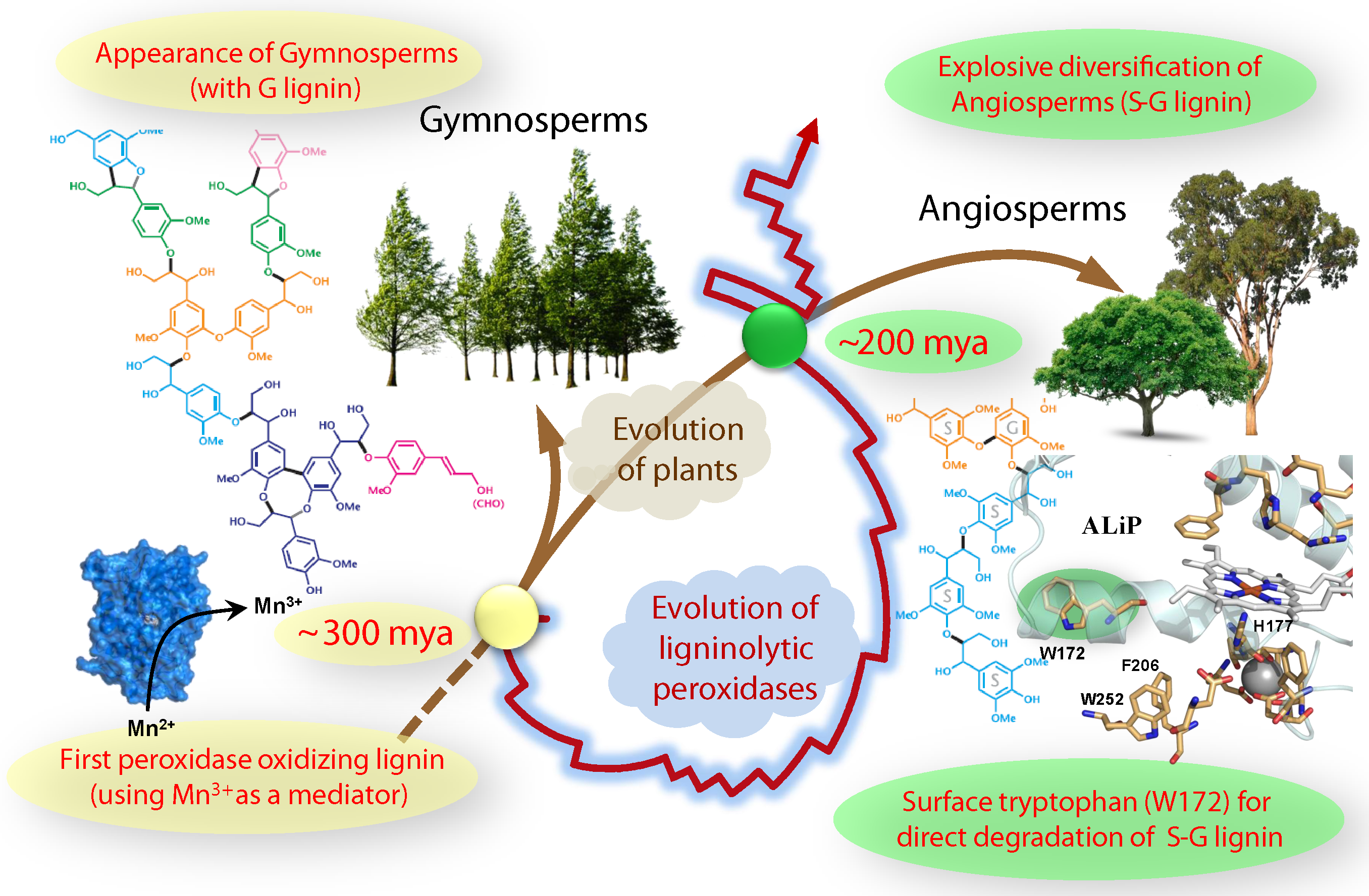 Insights into plants and fungi coevolution